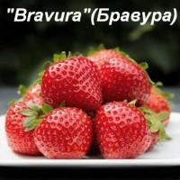 Клубника «Bravura» (Бравура)