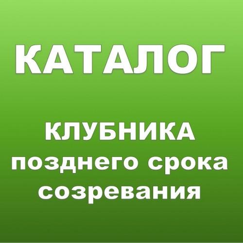 КЛУБНИКА КСД Позднего срока созревания